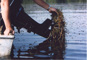 Engine Milfoil